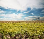 picture of loam  - sky and fields - JPG