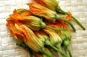 Squash-Blüten