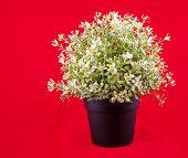 Plastic Flowers In A Pot