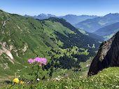 Alpine Wild Flowers In The Valley Of Wagital Or Waegital And By The Alpine Lake Wagitalersee (waegit poster