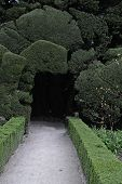 Tunnel Through Yew Trees