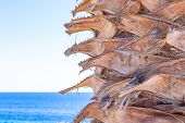Palm Tree Trunk Close-up On A Blurred Background Of The Sea Horizon. Blue Sea, Clear Sky And Palm Tr poster