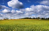 stock photo of bean-pod  - Scenic landscape of Soy bean fields - JPG