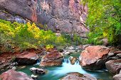 Virign River Zion National Park
