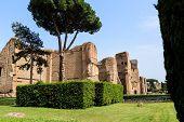 Scenic View Of Terme Di Caracalla In Rome. Umbrella Pines In Vast Around Ruins poster