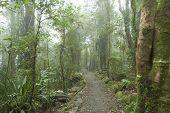 Cloudy Rainforest.