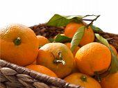 Mandarin orange in box isolated on white