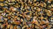 Firewood Chopped And Stacked For The Winter. Closeup Image Of Chopped And Stacked Firewood In Prepar poster