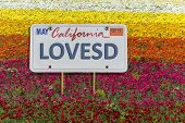 LOVESD on a license plate over fields of flowers - theme is Love San Diego. The flower fields are in