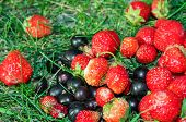 Many Strawberries And Blackberries