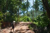 Hiking Through Tropical Forest In Thailand