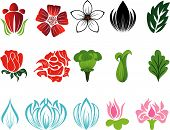 picture of single flower  - Set of different flower and leaves for self - JPG
