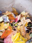 Fall Leaves In Bag
