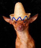 I'm A Dog Not A Mexican!