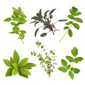 picture of valium  - Herb leaf selection of oregano sage valerian bay thyme and valerian over white background - JPG