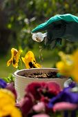 Fertilizing Flowers