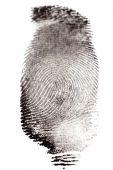 stock photo of dna fingerprinting  - Fingerprints with Black Ink on White Paper - JPG