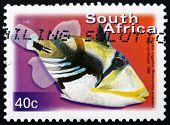 Postage Stamp South Africa 2000 Blackbar Triggerfish, Marine Fis