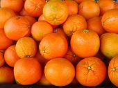 a bunch of grapefruits