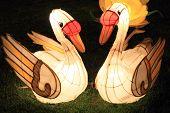 swan lanterns
