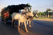 stock photo of ox wagon  - Traditional carriage drawn by cows in Cambodia - JPG