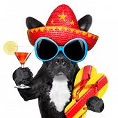 foto of mexican-dog  - dog with martini glass and mexican hat - JPG