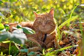 Red cat lies on the yellow autumn foliage