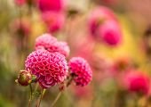 Beautiful autumn flowers, close-up