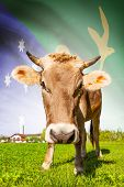 Cow With Flag On Background Series - Christmas Island