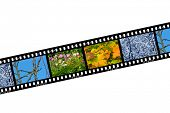 Spring, summer, autumn and winter, nature seasons in film frames, isolated on white background