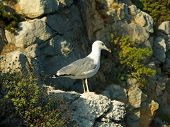 White seagull on rock, stone background