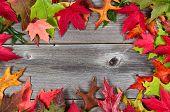 Border Of Autumn Leaves On Aged Wood