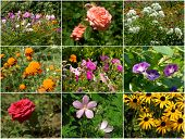 Collection of flowers - my photos