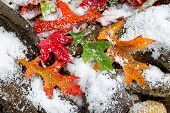 Early Snow During Autumn