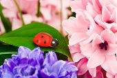Toy ladybug and flowers - abstract nature background