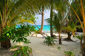 Trees on tropical beach - abstract nature background