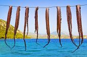 Octopus hanging to dry - seafood fishing background