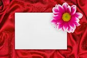 Greeting paper card and flower on rippled red cloth