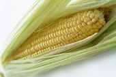 stock photo of corn cob close-up  - Corn cob close up on white background - JPG