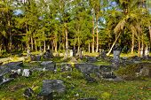 Old cemetery at Seychelles - travel background