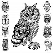 picture of nocturnal animal  - original artwork of owl - JPG