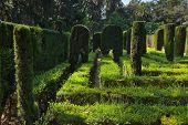Maze at Real Alcazar Gardens in Seville Spain - nature background