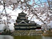Matsumoto Castle with Cherry Blossoms