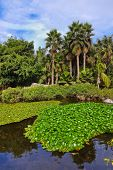 Pond in park at Tenerife Canary - nature travel background