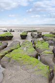 Green Mud Banks At Beal Beach