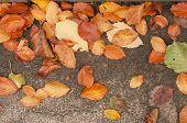 Dry Leaves On Grey Road
