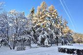 Winter Landscape Of City Park