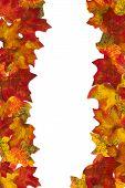 Autumn Leaf Stripe 6 Background