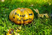 Halloween pumpkin on green grass background, outdoors