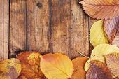 Yellow leaves on brown wooden background